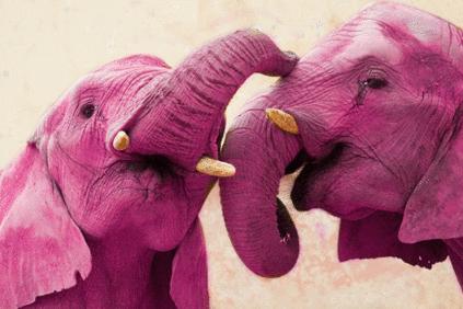 O empreendedorismo do Elefante Cor-de-Rosa